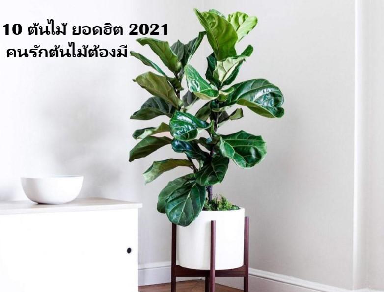 10 ต้นไม้ ยอดฮิต 2021 คนรักต้นไม้ต้องมี