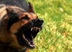 โรคพิษสุนัขบ้า ( Rabies )