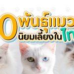 10 สายพันธุ์แมวนิยมเลี้ยงในไทย น่ารัก สดใส ถูกใจทาส